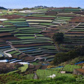 すり鉢状の段々畑