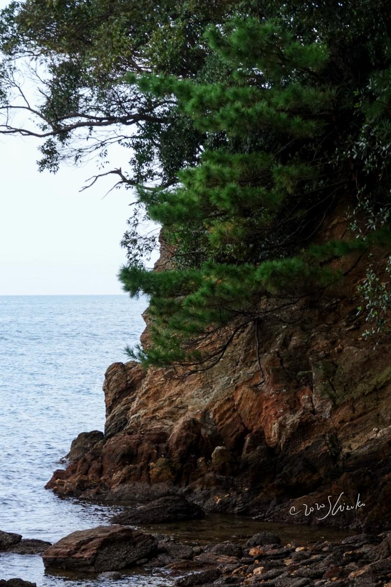 松と岩と海