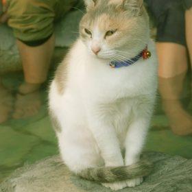 シーボルトの足湯と猫