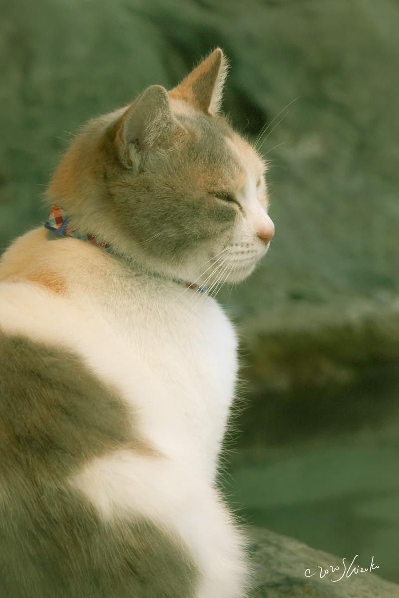 足湯にいる猫