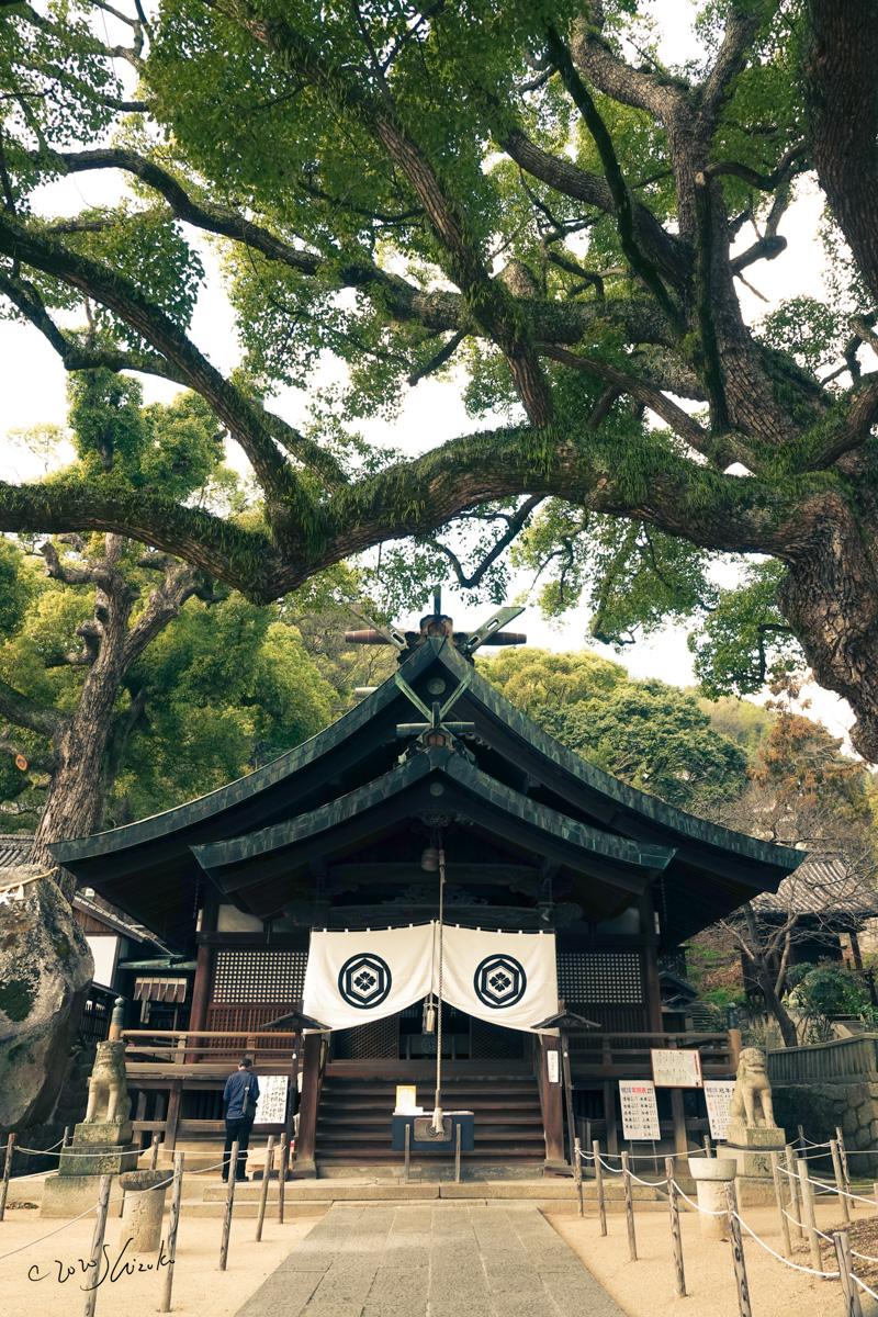 艮神社とクスノキ