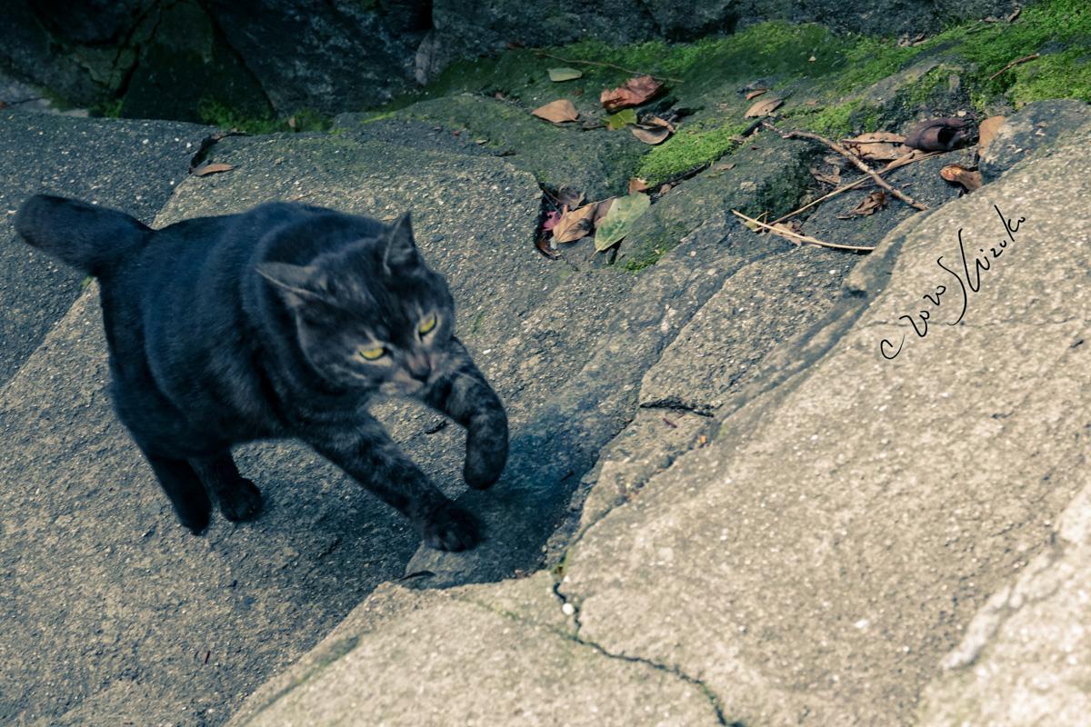 尾道の坂道を上る猫