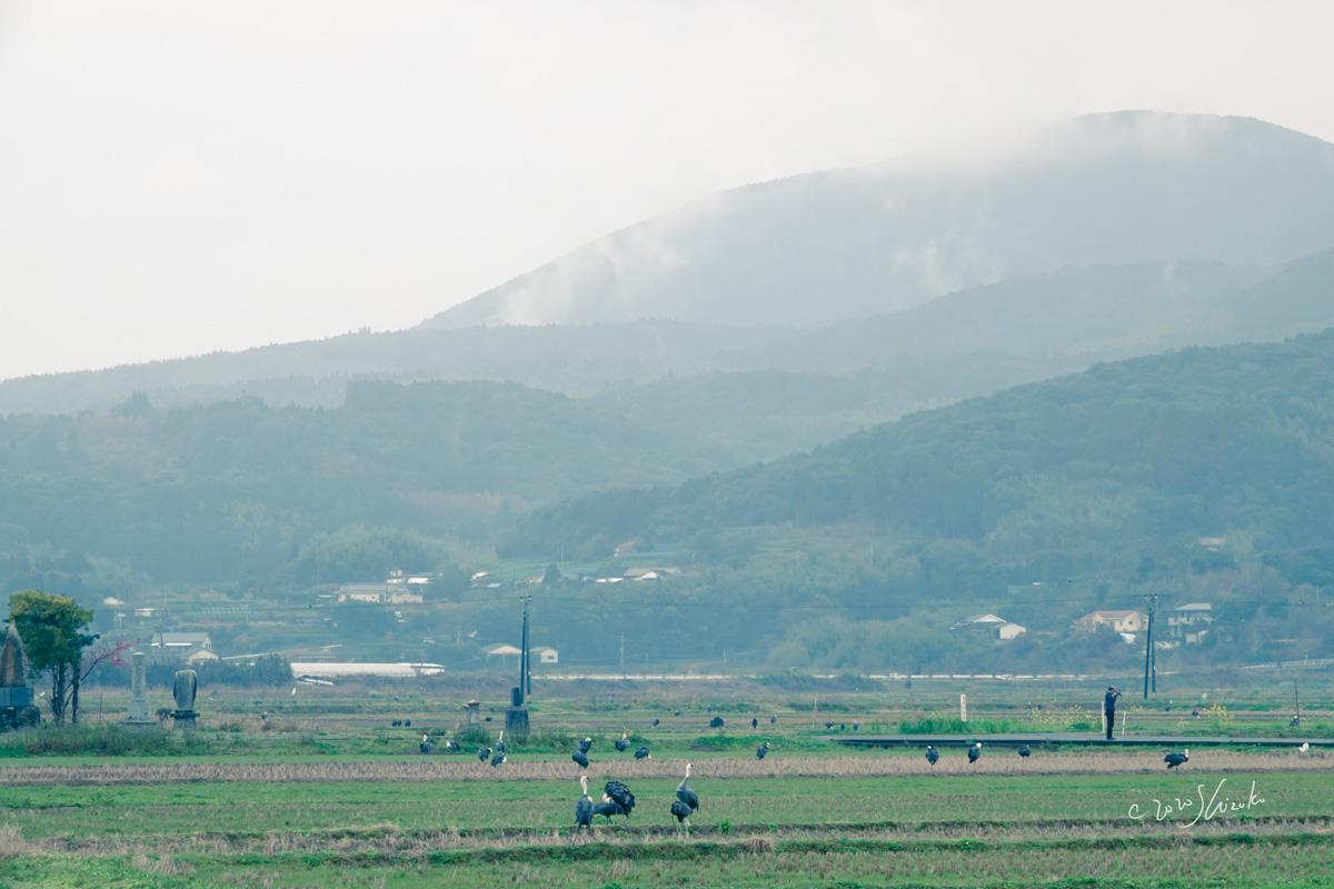 山とナベヅル