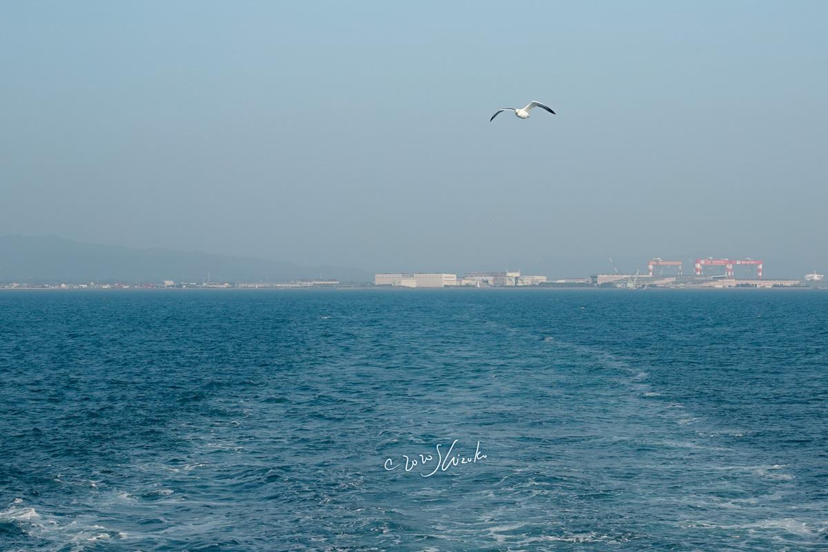有明海とカモメ