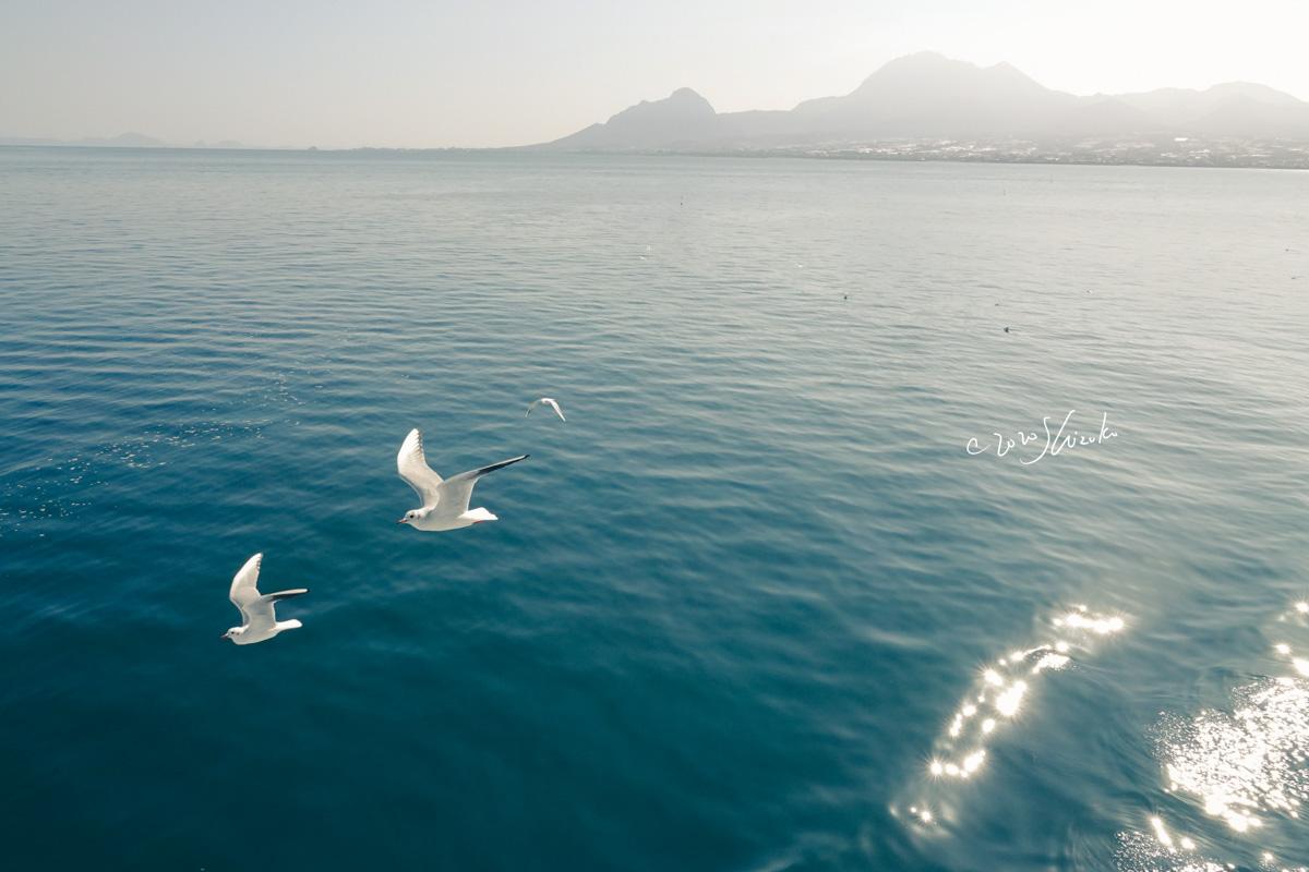 雲仙岳と有明海とユリカモメ
