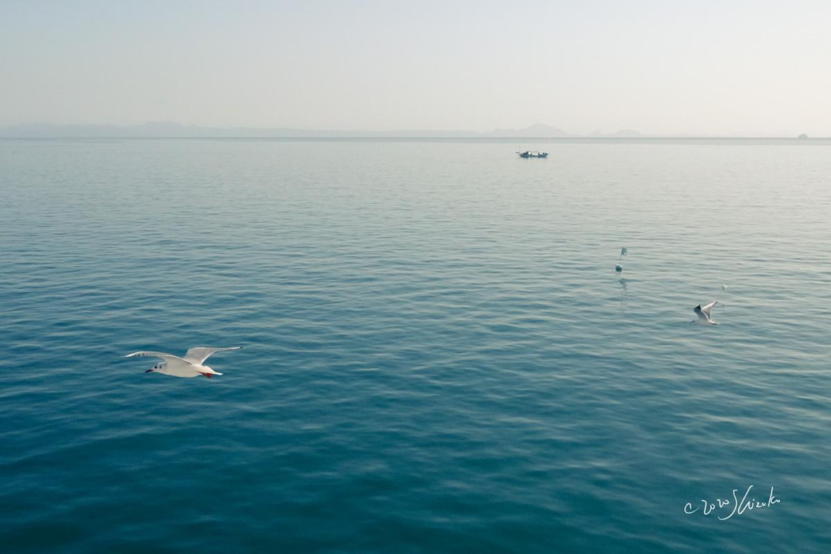 有明海とユリカモメ